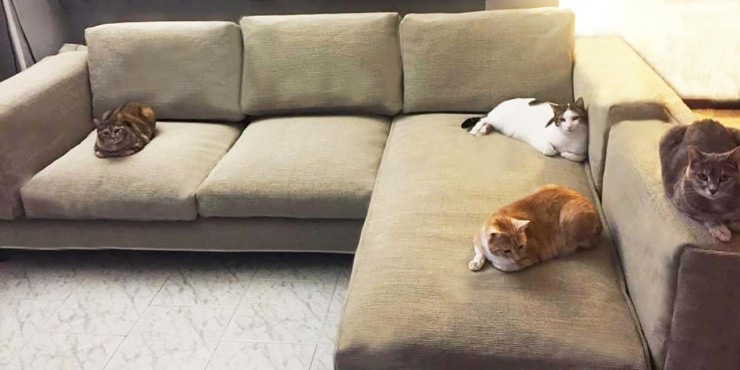 Solution Cat Friendly Sofa